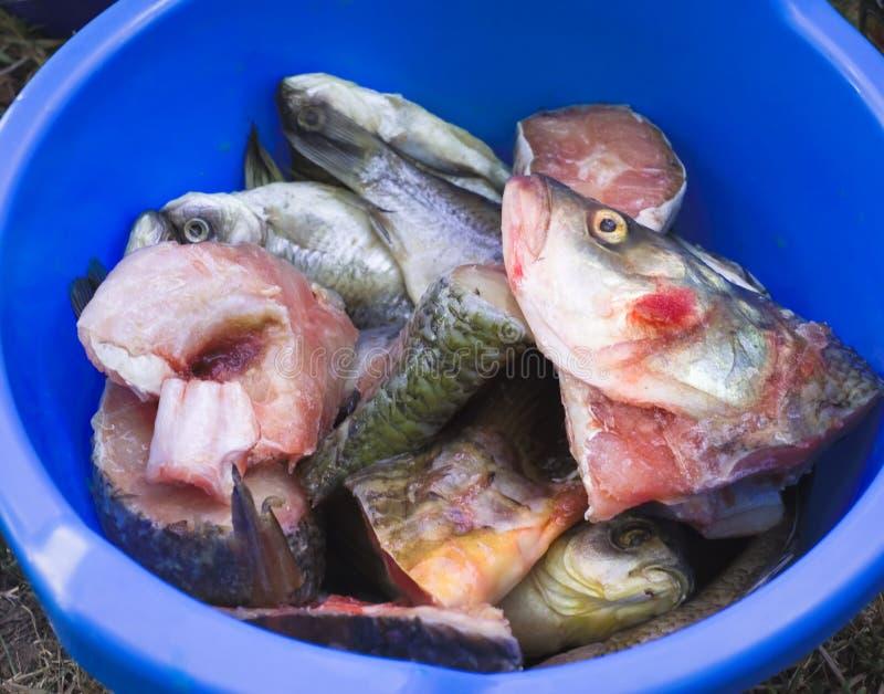 Gehackte Fische lizenzfreies stockfoto