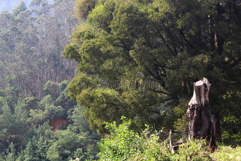 Gehackter Baum mit Hügelbäumen lizenzfreie stockfotos