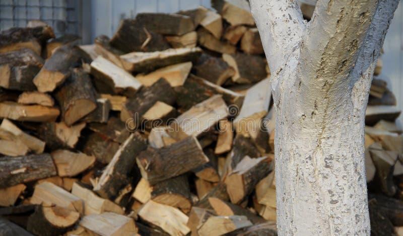 Gehakt eiken brandhout onder boom bij de boomgaard stock foto