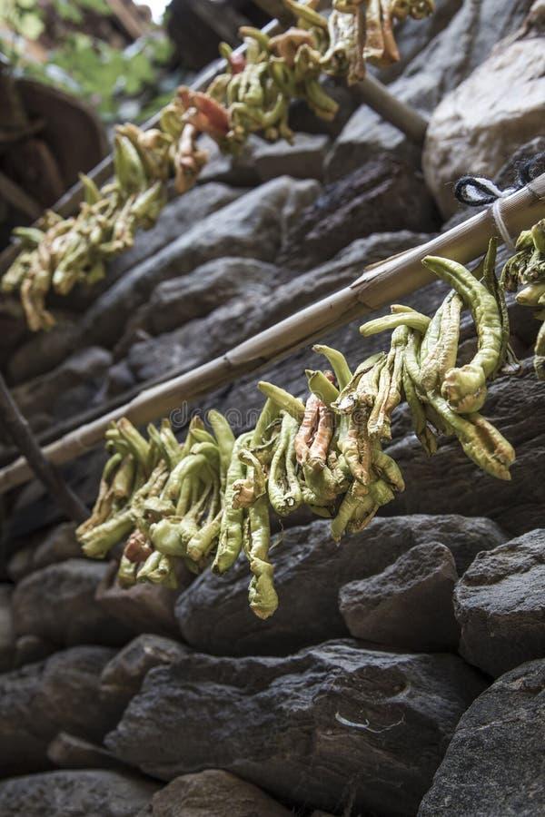Gehangen groene paprika's om te drogen stock afbeelding