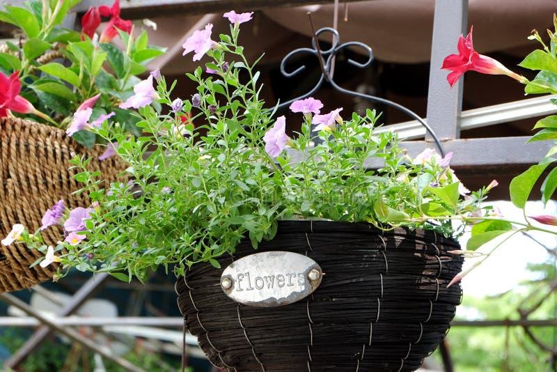 Gehangen ingemaakte bloemen die het milieu verfraaien royalty-vrije stock afbeeldingen