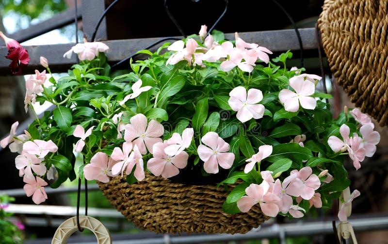 Gehangen ingemaakte bloemen die het milieu verfraaien royalty-vrije stock fotografie
