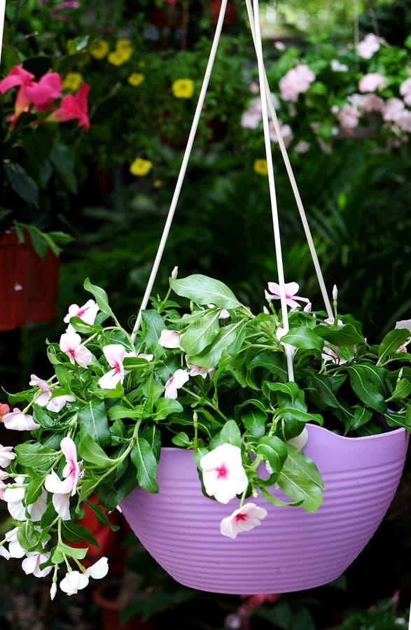 Gehangen ingemaakte bloemen die het milieu verfraaien stock foto's