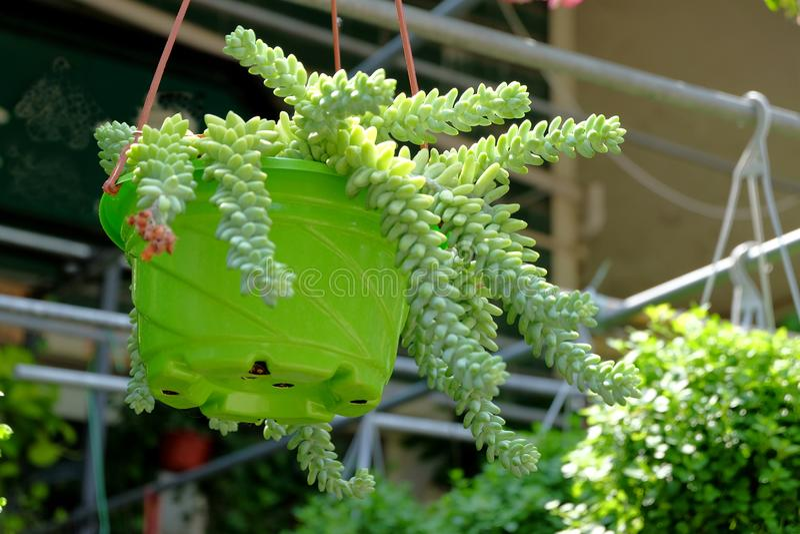 Gehangen ingemaakte bloemen die het milieu verfraaien stock fotografie