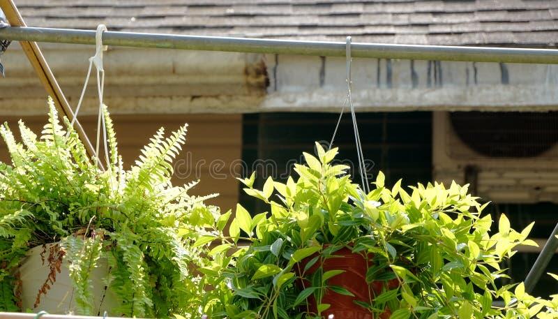 Gehangen ingemaakte bloemen die het milieu verfraaien royalty-vrije stock afbeelding