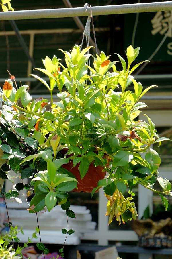 Gehangen ingemaakte bloemen die het milieu verfraaien stock foto