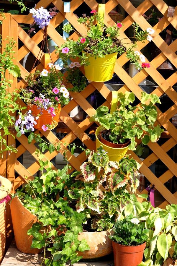 Gehangen ingemaakte bloemen die het milieu verfraaien royalty-vrije stock foto