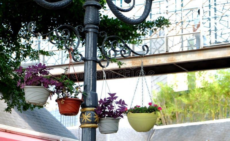 Gehangen ingemaakte bloemen die het milieu verfraaien royalty-vrije stock foto's