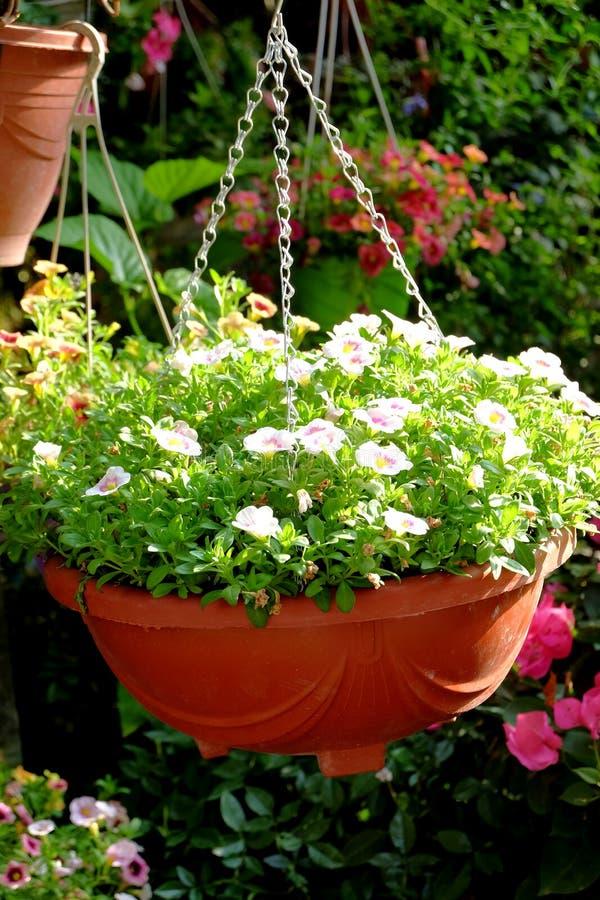 Gehangen ingemaakte bloemen die het milieu verfraaien stock afbeelding