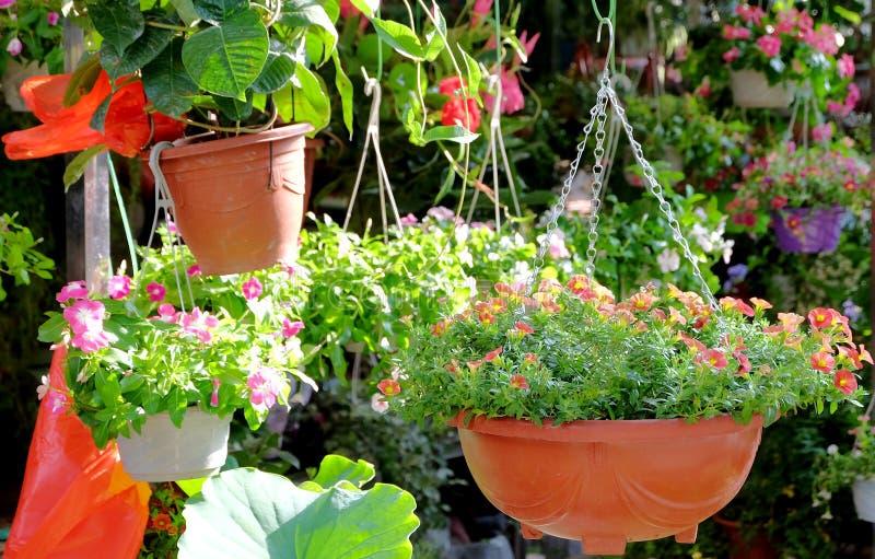 Gehangen ingemaakte bloemen die het milieu verfraaien stock afbeeldingen
