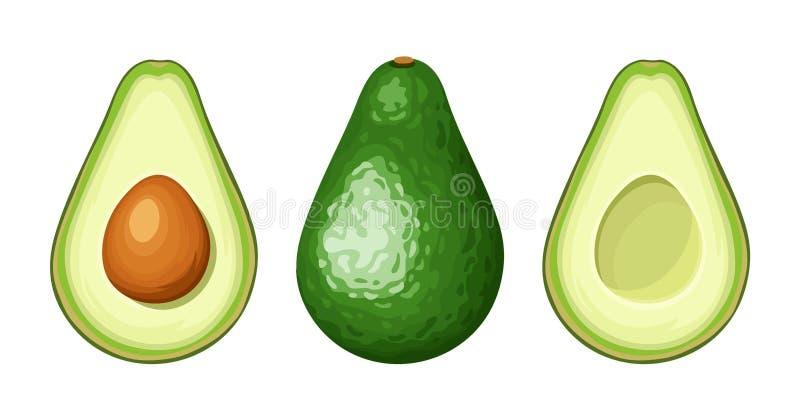 Geheel en gesneden avocadofruit Vector illustratie vector illustratie