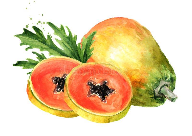 Geheel en gesneden zoet rijp papajafruit met groen blad Grafische ontwerpelementen ge?soleerde waterverfhand getrokken illustrati stock illustratie