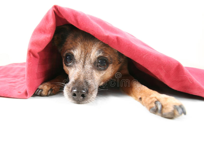 Geheime hond stock foto