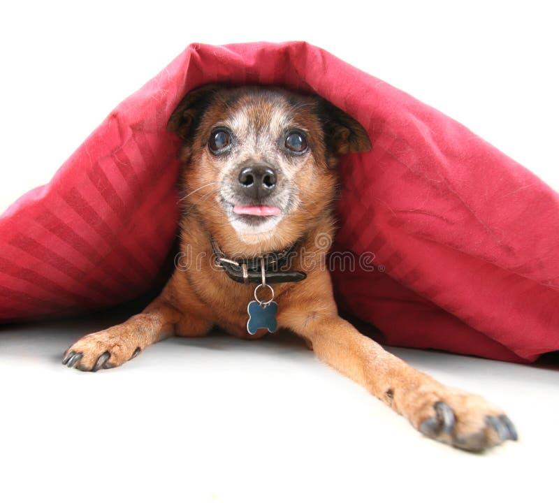 Geheime hond royalty-vrije stock foto's