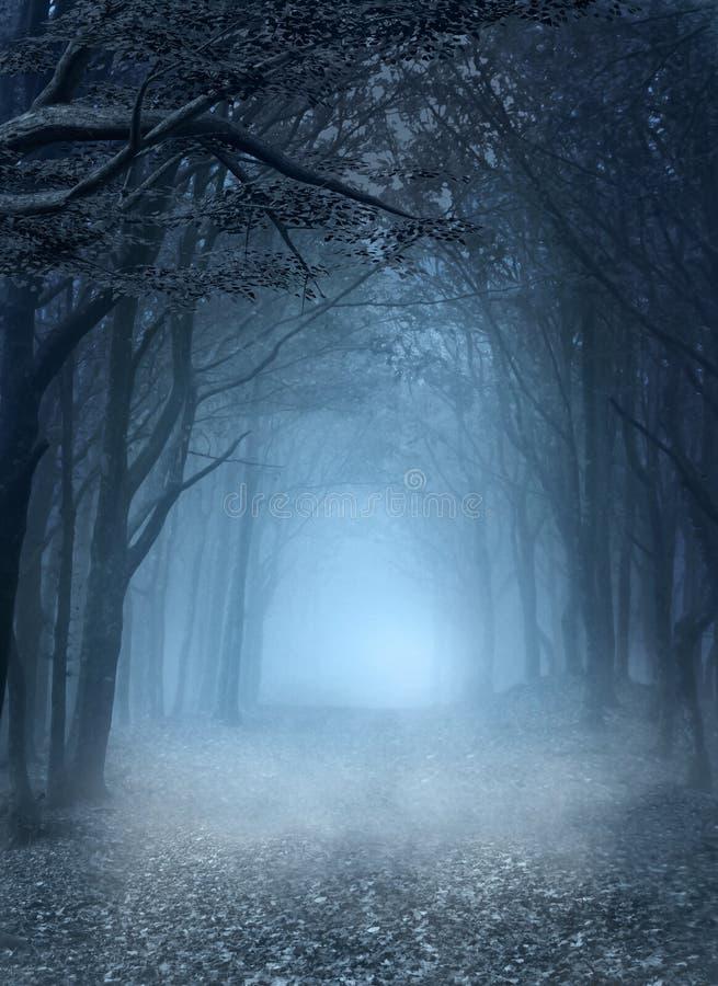 Geheime weg in het verrukte bos vector illustratie