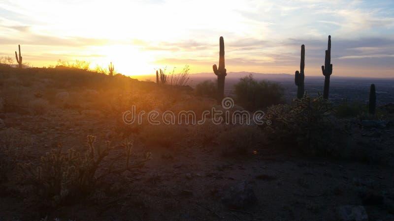 Geheimen van Woestijn royalty-vrije stock foto