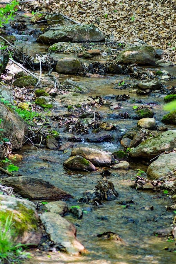 Geheimer Gebirgsstrom in blauen Ridge Mountains lizenzfreie stockfotos