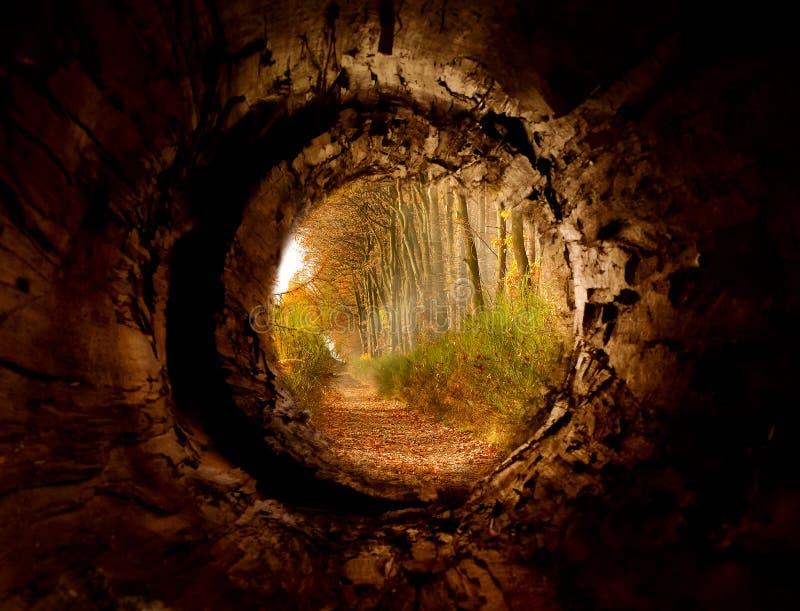 Geheimer Tunnel zur bezauberten Waldbahn lizenzfreie stockfotos