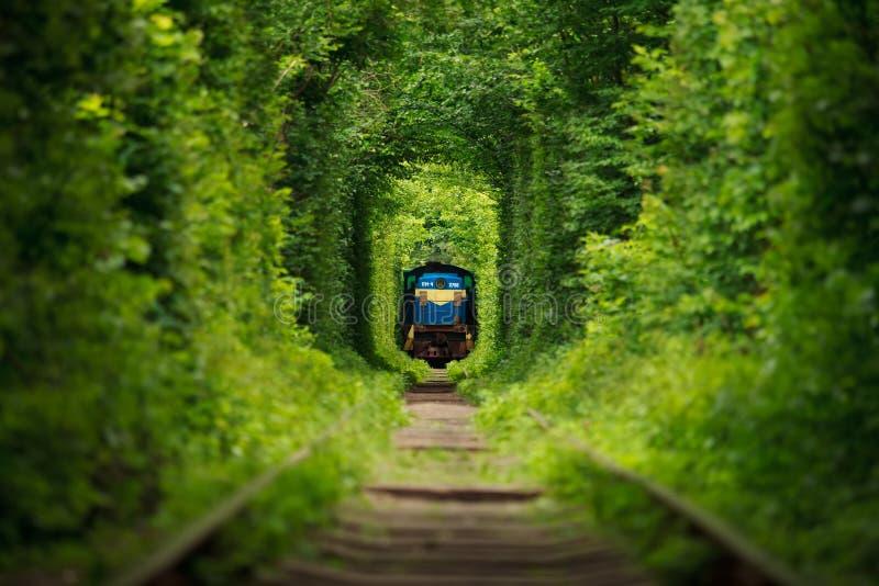 Geheimer Zug 'Tunnel der Liebe' in Ukraine lizenzfreie stockfotos