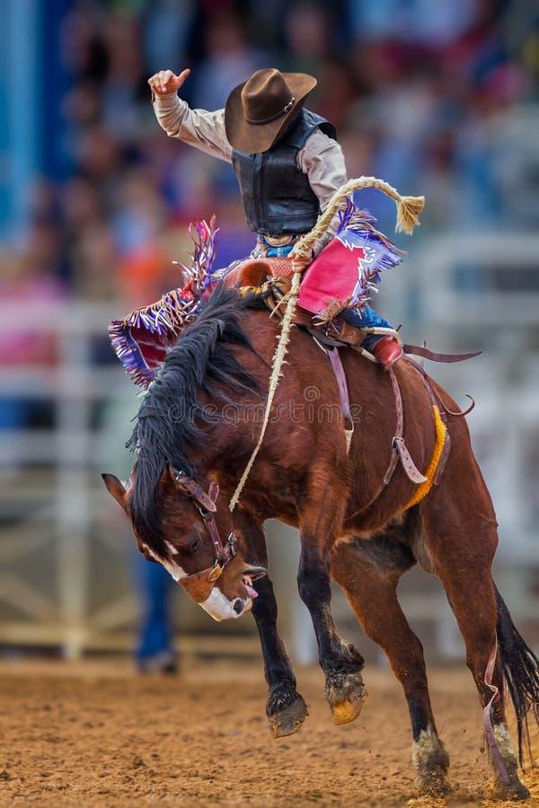 Geheimniscowboy sträubt sich auf wildem Mustang in Florida-Rodeo lizenzfreie stockfotos