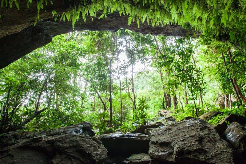 Geheimnishöhle im tropischen Wald, im üppigen Farn, im Moos und in der Flechte auf der Steinwand der Höhle Wasser spritzt mit tro lizenzfreies stockbild
