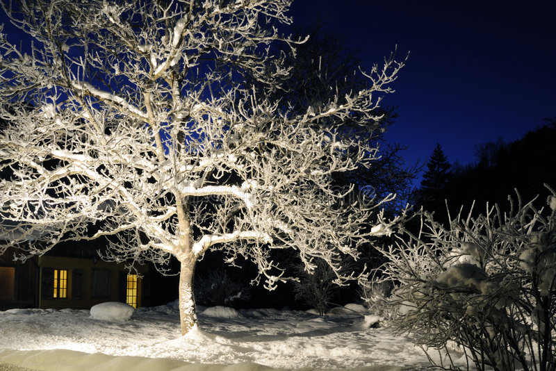 Geheimnisvolle Winternacht lizenzfreies stockfoto