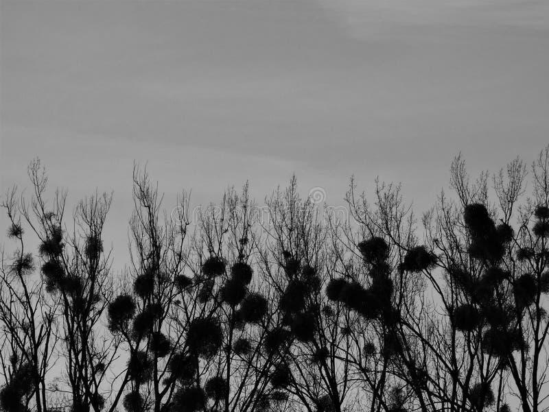 Geheimnisvoller Himmel stockfotografie