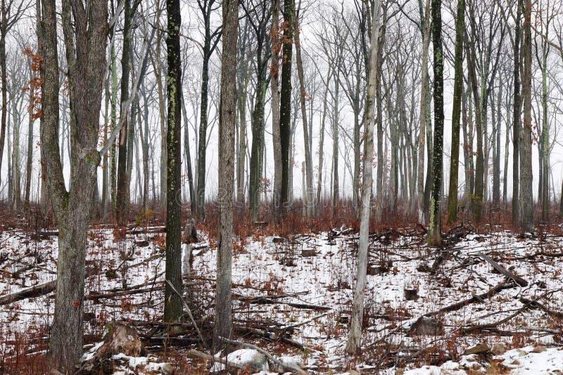 Geheimnisvoller nebeliger Wald lizenzfreie stockbilder