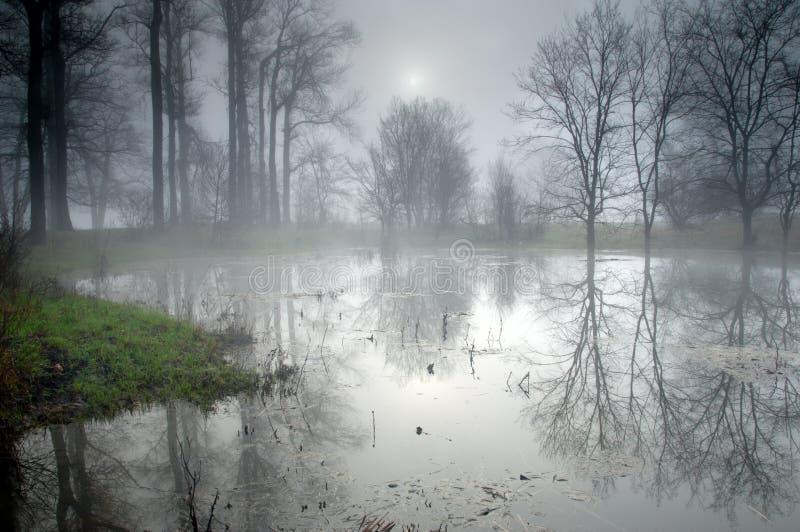 Geheimnisvoller Wald am nebeligen Morgen lizenzfreie stockbilder
