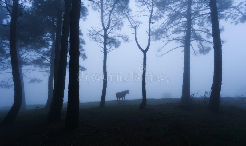 Geheimzinnig bos met een koe royalty-vrije stock foto