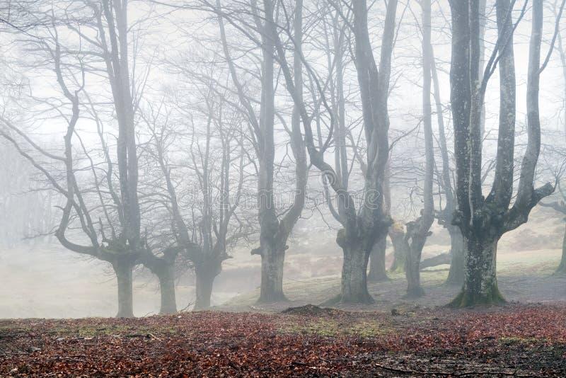 Geheimzinnig bos met mist stock afbeeldingen
