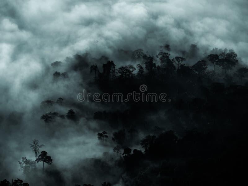 Geheimzinnig bos met mist en donker boomgebied voor exemplaarruimte royalty-vrije stock afbeelding