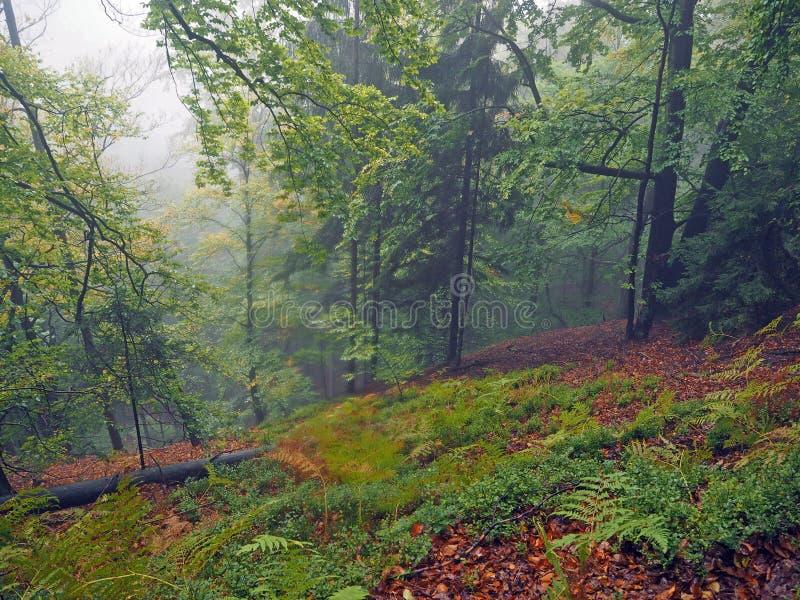 Geheimzinnig de herfst mistig kleurrijk bos met rode gevallen bladeren a stock foto's