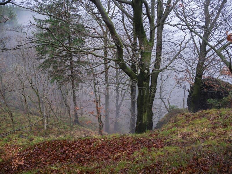 Geheimzinnig de herfstbos in nevelige de mistdag van november met gevallen l royalty-vrije stock foto's