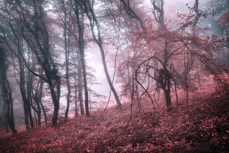 Geheimzinnig de lentebos in mist met roze bladeren en rode bloemen royalty-vrije stock foto's