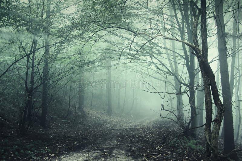 Geheimzinnig donker bos met griezelige bomen en groene mist stock afbeelding