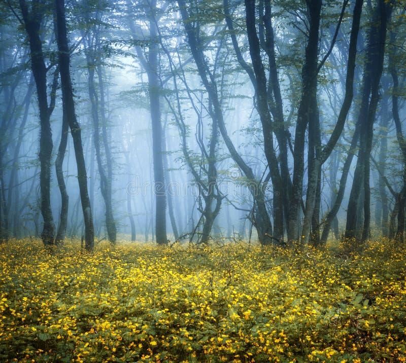 Geheimzinnig donker bos in mist met groene bladeren en bloemen royalty-vrije stock foto's