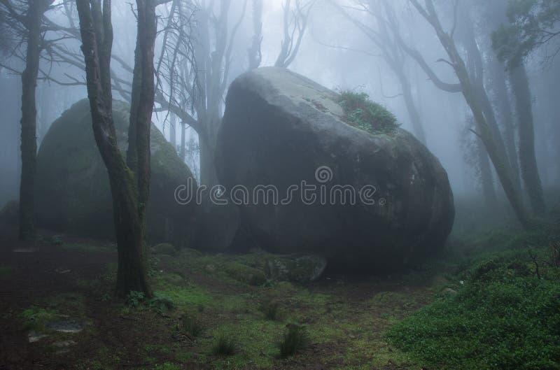 Geheimzinnig donker oud bos met mist stock fotografie
