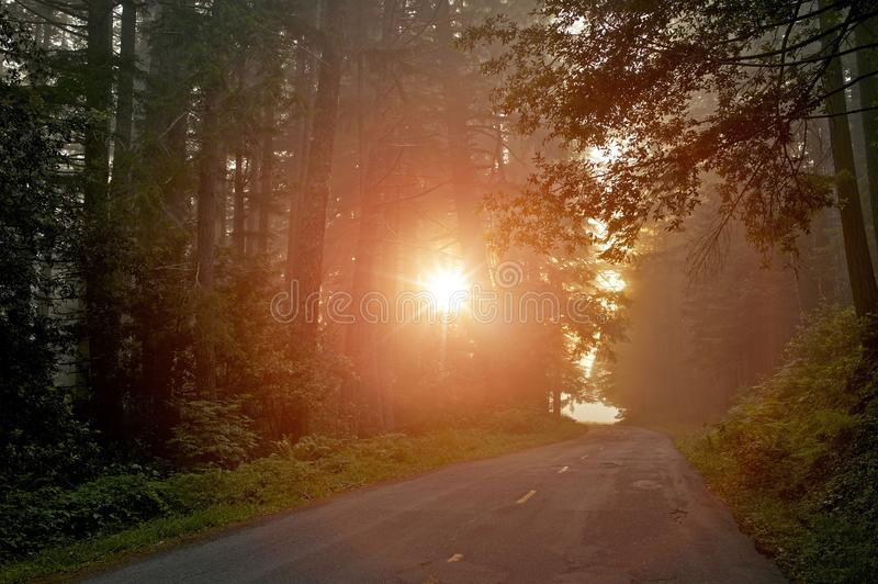 Geheimzinnig Forest Light stock fotografie