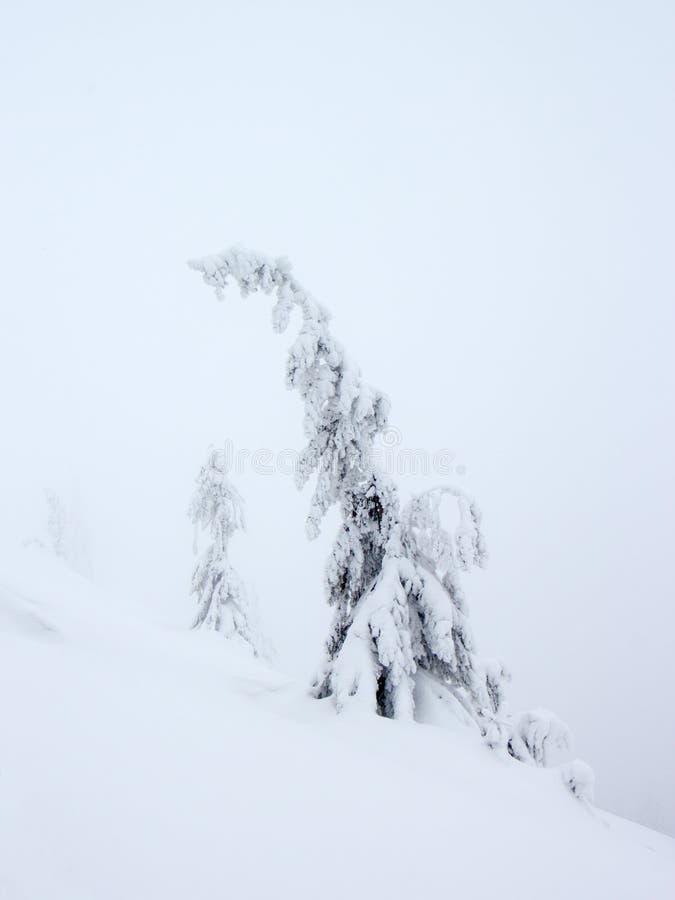 Geheimzinnig haarlok op mistige de winterbergen stock fotografie