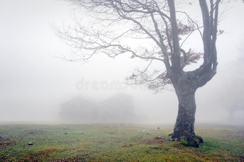 Geheimzinnig huis in het bos met mist royalty-vrije stock afbeeldingen