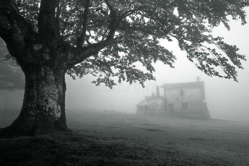 Geheimzinnig huis in mistig bos stock foto