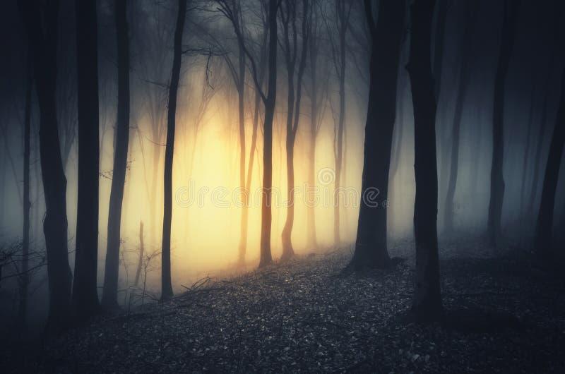 Geheimzinnig licht in donker achtervolgd bos bij nacht stock foto's