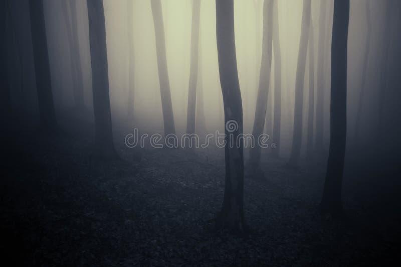 Geheimzinnig minimaal donker bos met mist stock foto's