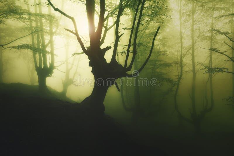 Geheimzinnig mistig bos bij de lente royalty-vrije stock fotografie