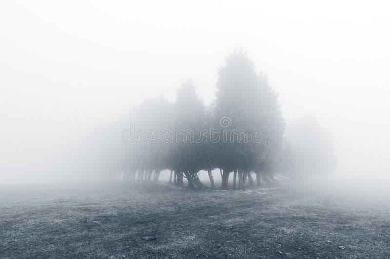 Geheimzinnig mistig bos in zwart-wit stock foto