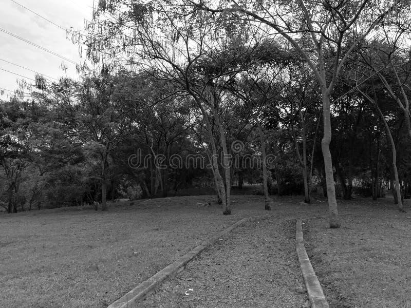 Geheimzinnig park stock foto's