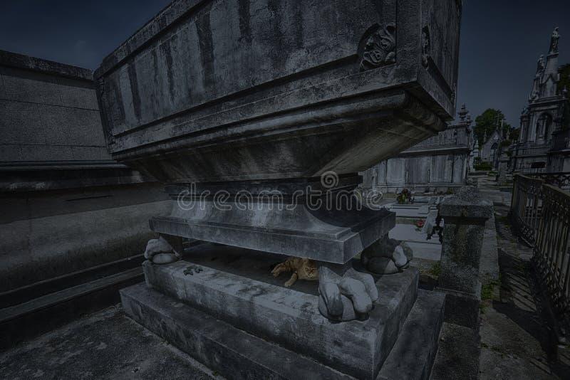 Geheimzinnige begraafplaatskat stock afbeeldingen