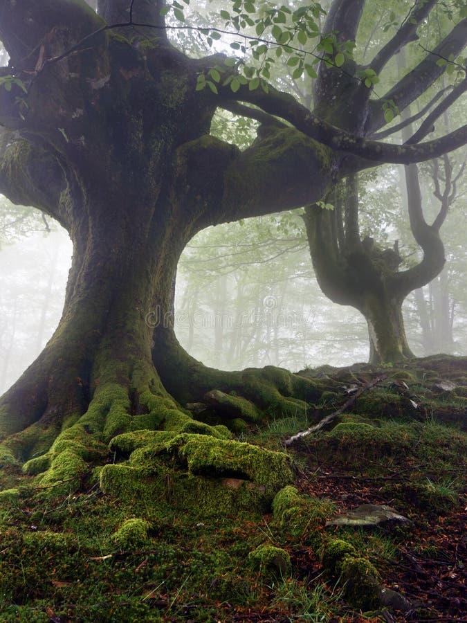 Geheimzinnige en verdraaide bomen royalty-vrije stock afbeeldingen