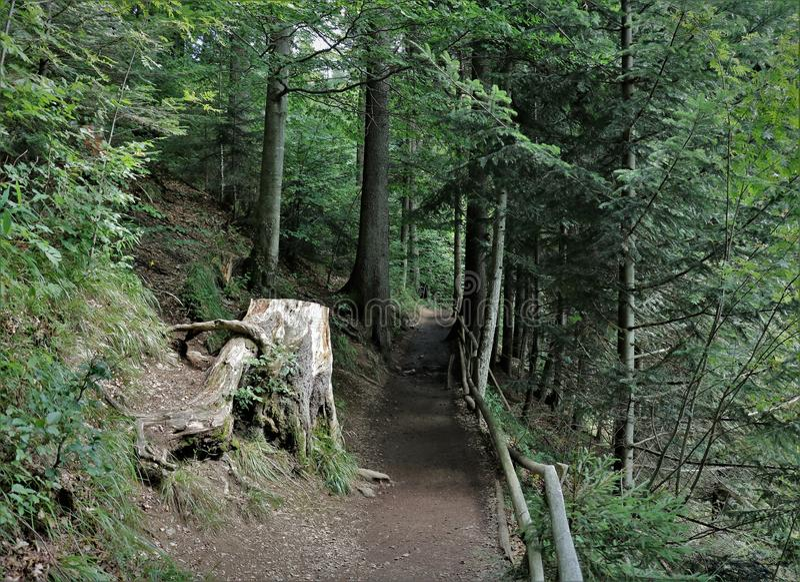 Geheimzinnige fairytale bosweg, weg, mooie stomp stock afbeelding